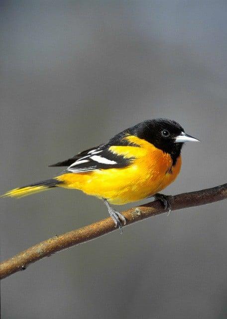 DIY Oriole Bird Feeder